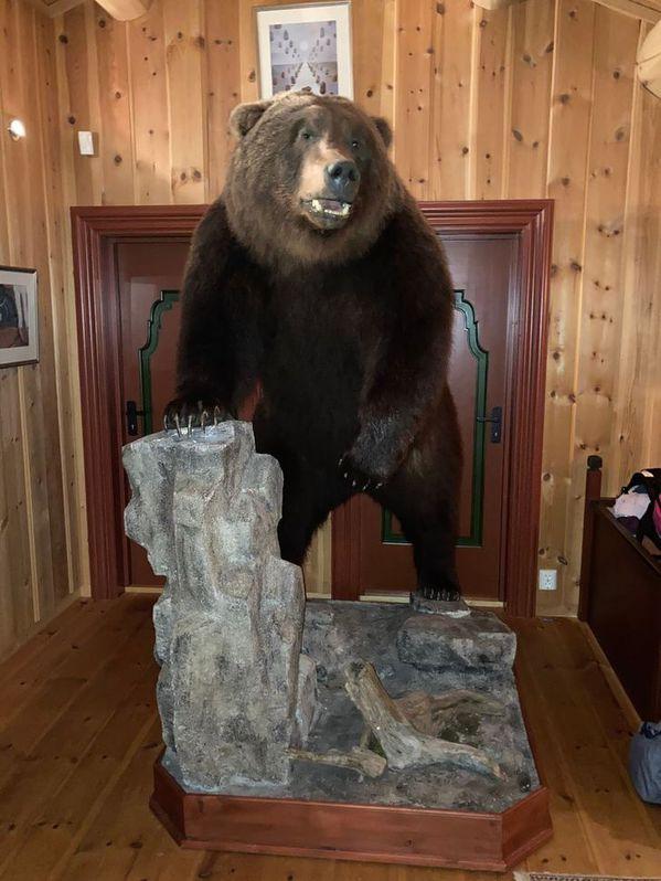 Braunbär Präparat aus Kamtschatka Haushalt