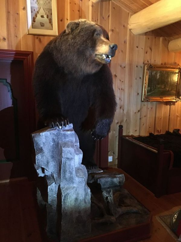 Braunbär Präparat aus Kamtschatka Haushalt 2