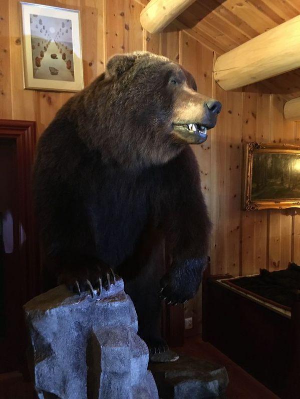 Braunbär Präparat aus Kamtschatka Haushalt 3
