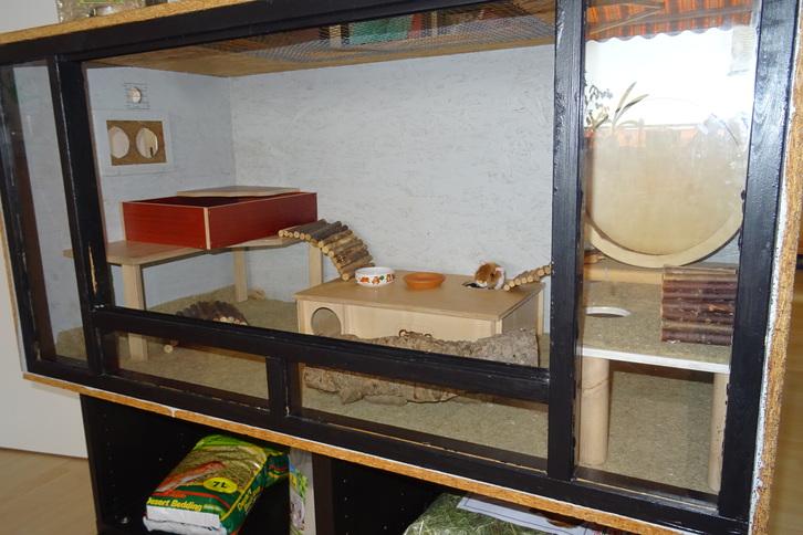 Hamstergehege Tiere 4