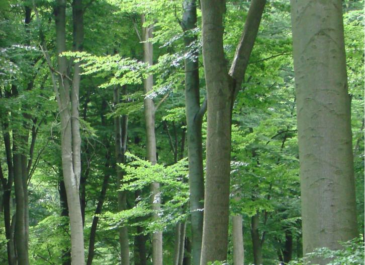 Rundholz24.de -der digitale Holzmarkt Sonstige