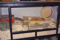 Hamstergehege