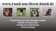 Hundeschule, Problemhunde, Hundephysiotherapie, Fotoshootings