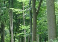 Rundholz24.de -der digitale Holzmarkt
