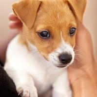 Wer hat in Gelsenkirchen einen kleinen Hund zu verschenken, bzw. abzugeben......?????